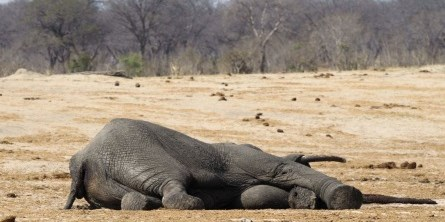 Over-100-elephants-killed-in-Zimbabwe-800×400