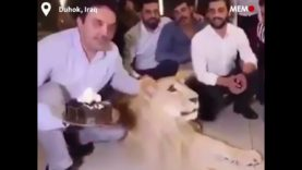 Taunting The Lion – Middle East NGO Boss Smashes Cake in Birthday Lion's Face…