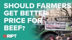 FARMING DEBATE: Should farmers get better beef prices from factories?