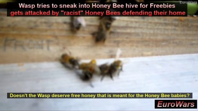 """Are Honey Bees """"Racist"""" Too? Honey Bees Protect Their Hive & Honey From Intruder Bumble Bees & Wasps"""